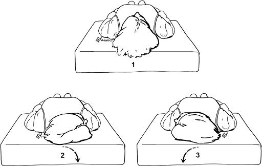 Figure 4. Supine Roll Test