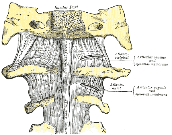 срединный атлантоосевой сустав форма