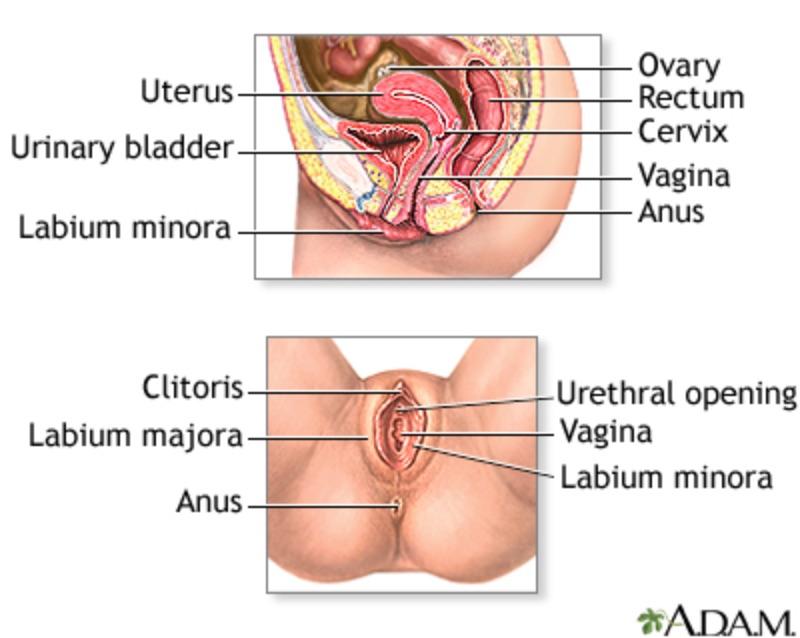 Natural Ways To Manage Vaginal Burning And Irritation