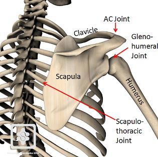 Scapulothoracic-joint.jpg