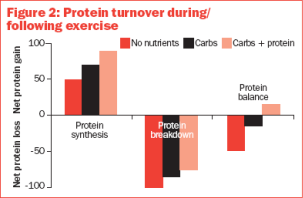 Protein turnover.png