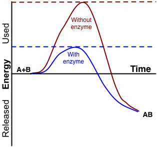 Enzyme activation energy.png