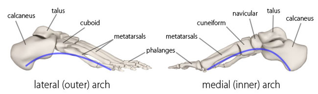 Arches Of The Foot Physiopedia