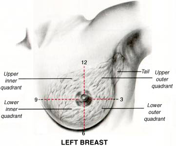 Breast quadrants.jpg