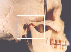 Tmj Anatomy Physiopedia