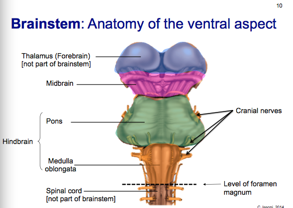 Introduction To Neuroanatomy