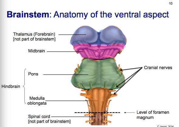 Introduction to Neuroanatomy - Physiopedia