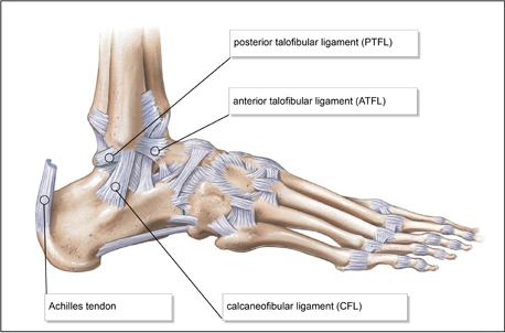 Lateral-ankle-ligaments.jpg