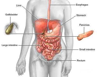 irritable bowel syndrome - physiopedia, Human body