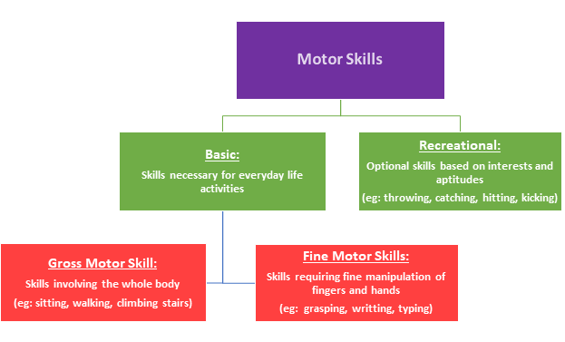 DS Motor Skills.png