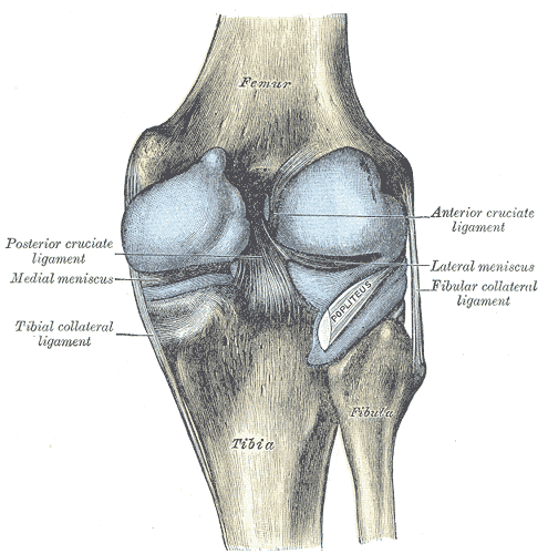 Posterior Knee Pain Physiopedia