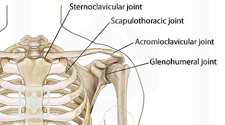 Shoulder - Physiopedia