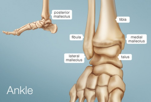 Ankle Impingement Physiopedia