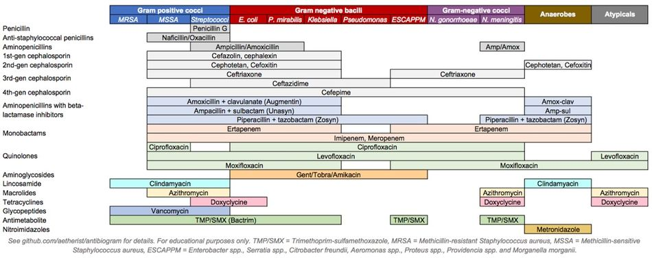 Antibiotics coverage diagram.jpg
