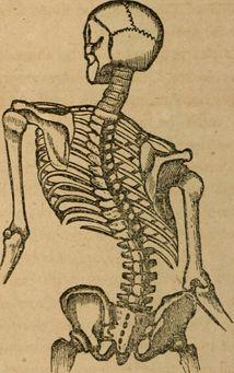Scoliosis Physiopedia