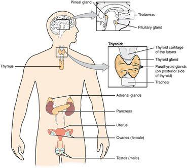 Metabolic/Endocrine Disorders