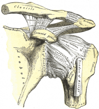 Anterior Shoulder Instability Physiopedia