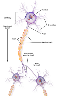 Neuron Part 1.png