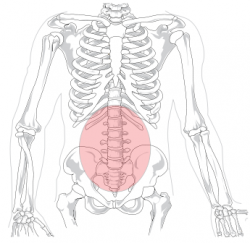 Facet Joint Syndrome - Physiopedia