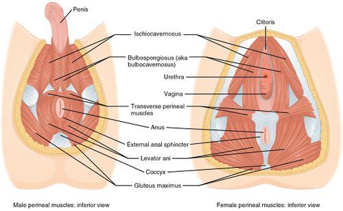 Prostatitis fizio Milyen műveletek vannak ha a prostatitis