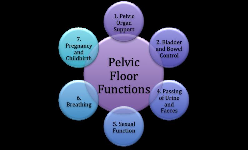 Main Pelvic Floor Muscle Functions
