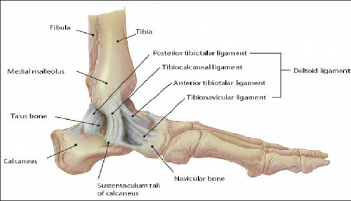 Stress tests for Ankle ligaments - Physiopedia