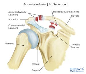 Ligaments of the Acromioclavicular Joint