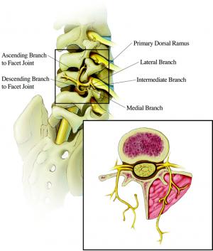 Durere de la coloana vertebrala pana la ombilic