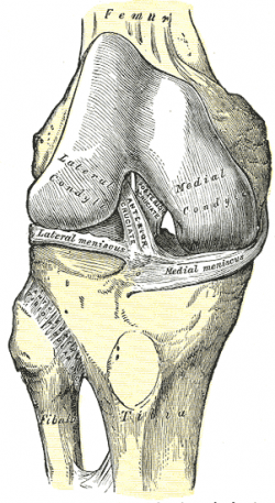 Anterior Cruciate Ligament (ACL) - Physiopedia, universal access ...