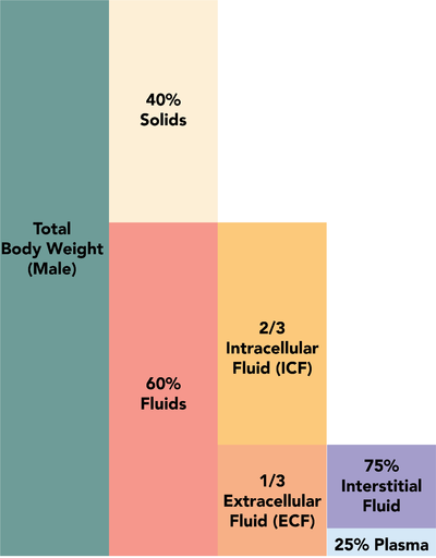Fluid composition of the body 1.3.png
