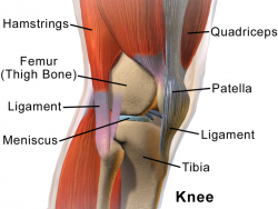Anterior knee pain physiopedia for Exterior knee pain