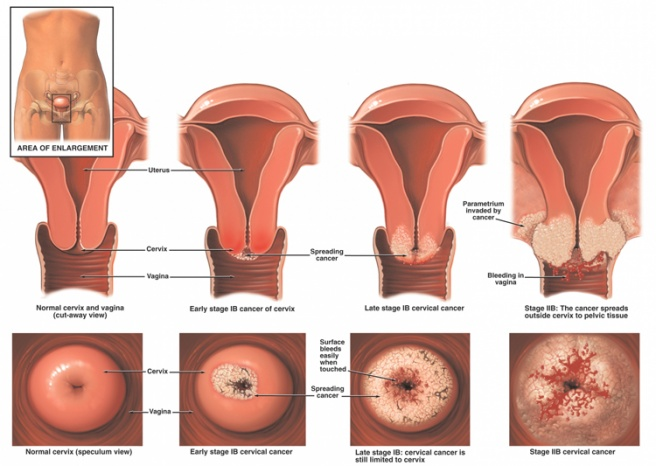 view Atlas of Orthodontics A