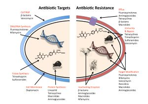 Antibiotic resistance mechanisms.jpg