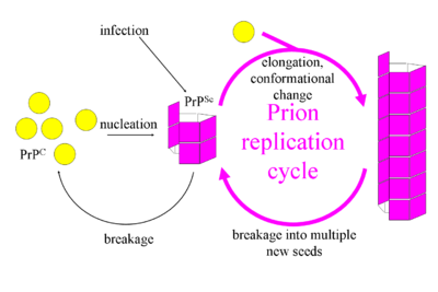 Prion Replication.png