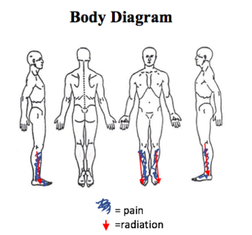 Body Diagram.png
