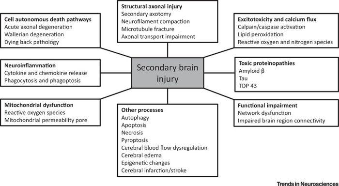 Primary and secondary brain injury