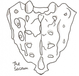 SACRUM ALTERED.png