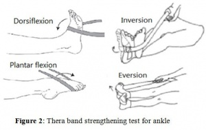 Fig. 8:  Thera-Band exercises