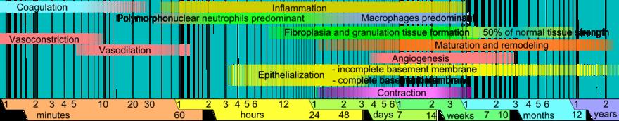 Soft Tissue Healing Physiopedia