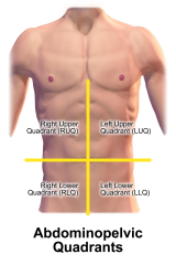 Abdominal Quadrants - Abdominopelvic Quadrants. This image was donated by Blausen Medical. Please visit our website to see more medical illustrations and animations.