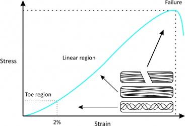 Tendon biomechanics physiopedia tendon stress strain curve ccuart Image collections