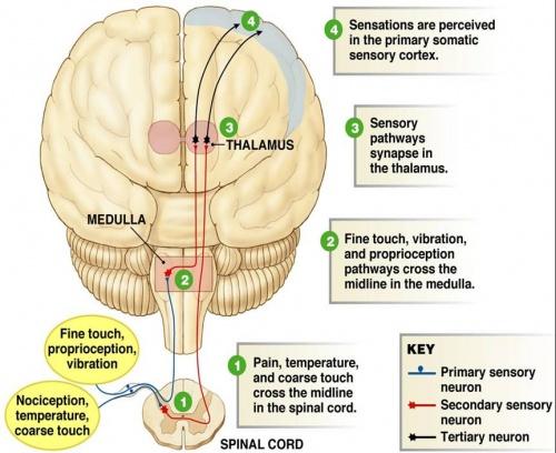 Autonomic motor neuropathy