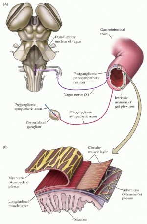 Editing Irritable Bowel Syndrome - Physiopedia