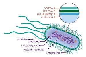 Bacteria, why do they make me sick 10.jpg
