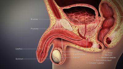 Prostatitis Uro Pro kezelése 1 keresztes fehérje a vizeletben