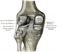 Posterior View of Knee