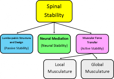 Integrated Units Of The Muscular System 68