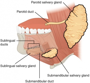 Dry Mouth - Physiopedia