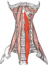 Cervical Anatomy Physiopedia מה שחם היום אפשר ללבוש כבר מחר. cervical anatomy physiopedia