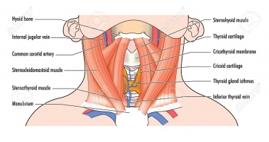 Structure And Function Of The Cervical Spine Physiopedia